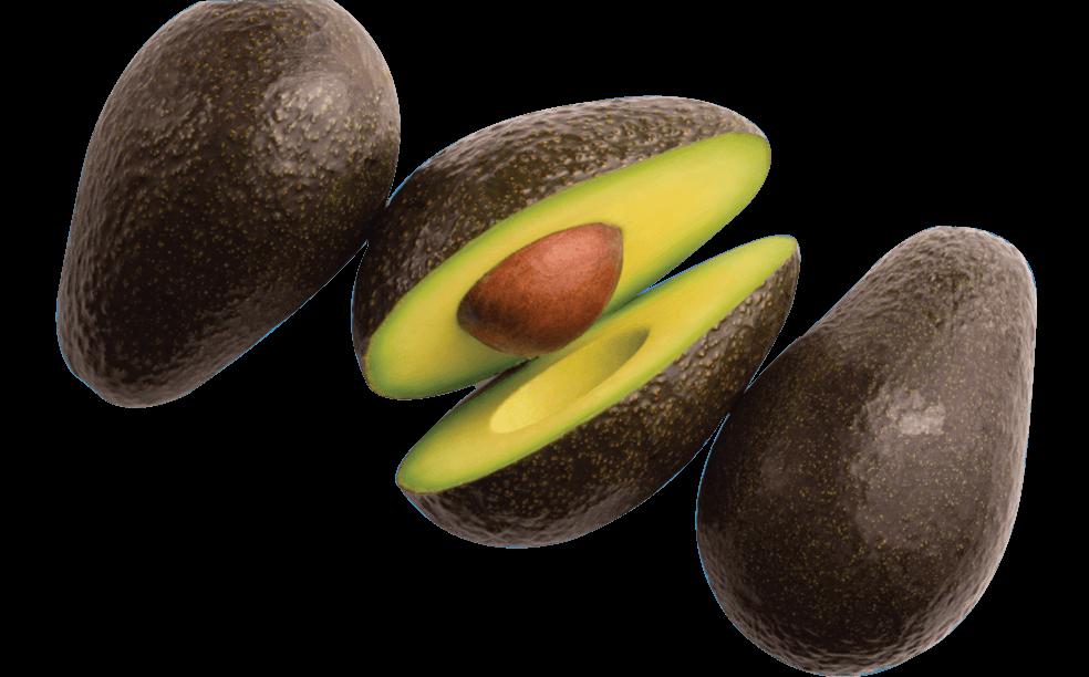 cani-avocado